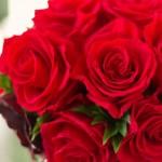 12月の誕生花赤バラを大切な人に贈る時の6のポイント