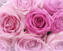 薔薇の花言葉を理解した気持ち伝わる贈り方7選