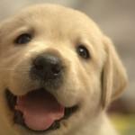 夢占いで診断★犬の夢を見る時の8つの意味