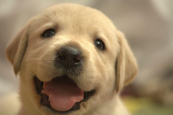 夢占いで分析★犬の夢を見る時の8つの意味