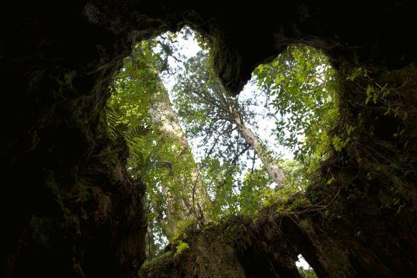 四緑木星 森林 ハート