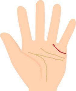 薬指の下までの長く伸びる結婚線