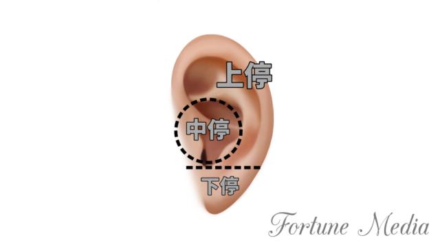 耳の人相学的部位 上停 中停 下停