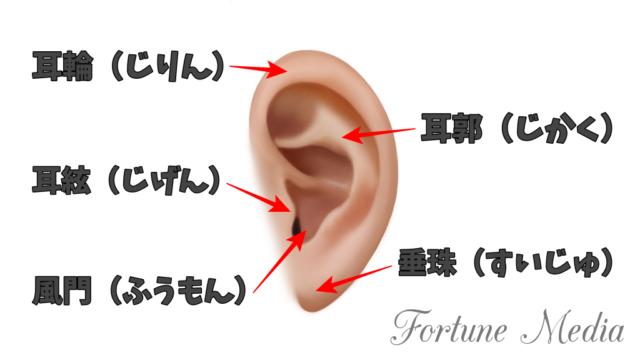 耳の人相学的部位名 耳輪 耳郭 耳絃 風紋 垂珠